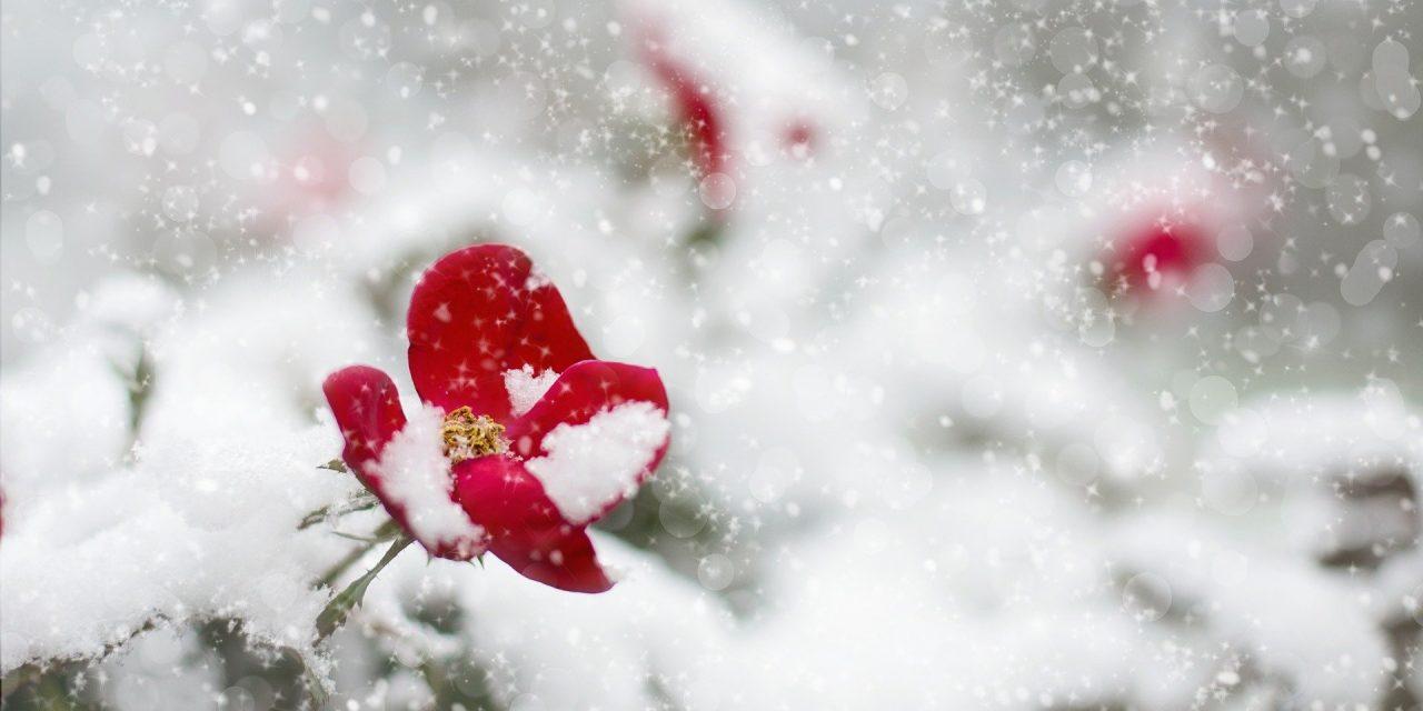 Newsletter – Term 2 (Winter 2019)